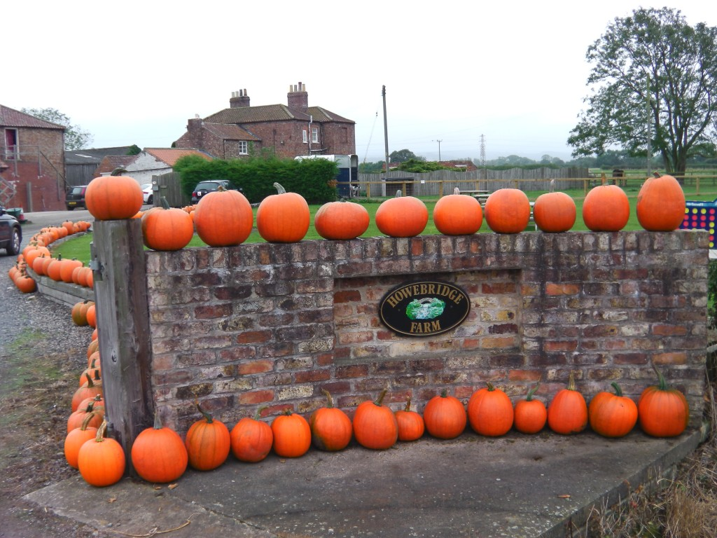 A wall lined with pumpkins